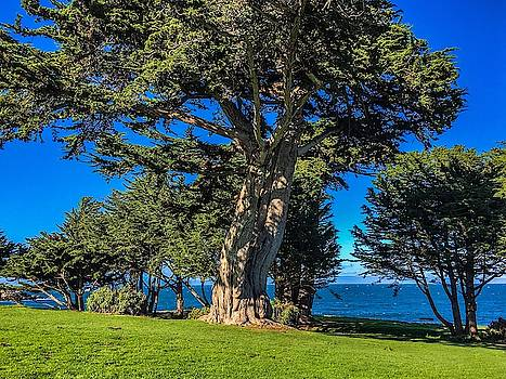Kings Mountain - Monterey by Christina Ford