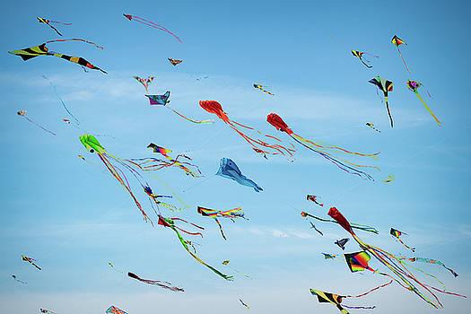 Kites Kites Kites by Steve Gadomski