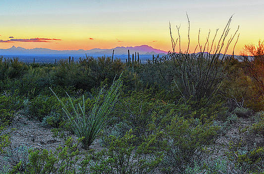 Chance Kafka - Kitt Peak and Sonoran Desert