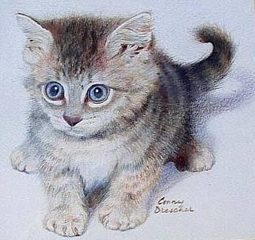 Kitten by Constance DRESCHER