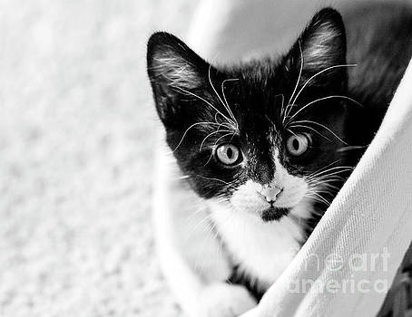 Kitten in a Basket by Pam  Holdsworth