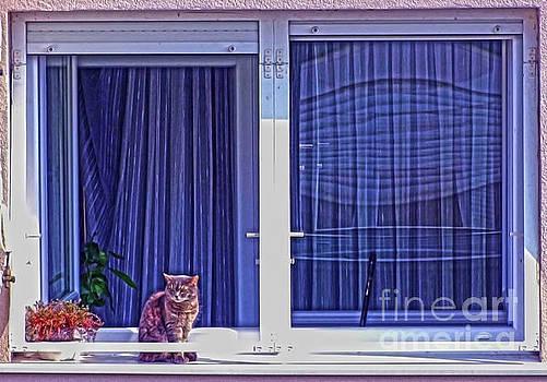 Kitty On The Window by Jasna Dragun