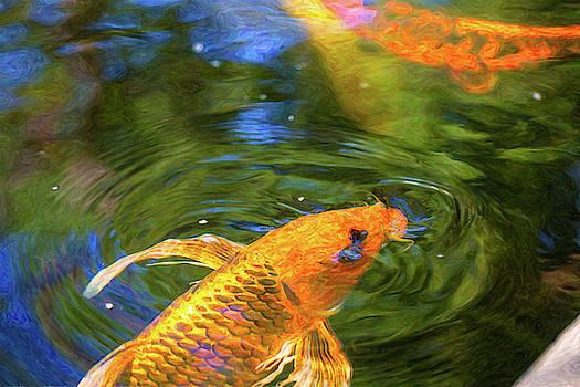 Omaste Witkowski - Koi Pond Fish - Turn Me Right Round - by Omaste Witkowski