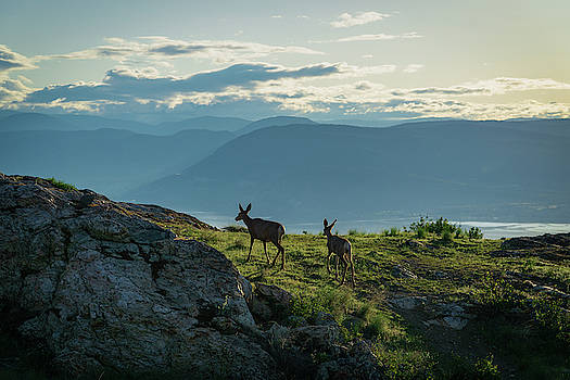 Kuipers Peak Deer by Dave Matchett