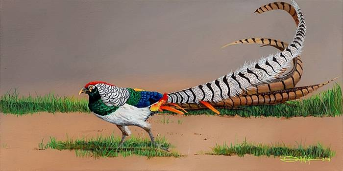 Lady Amherst Pheasant by Dana Newman