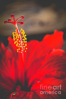 Lady In Red by Nancy Forehand