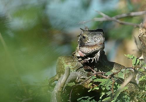 Fraida Gutovich - Lagoon Lizard 3