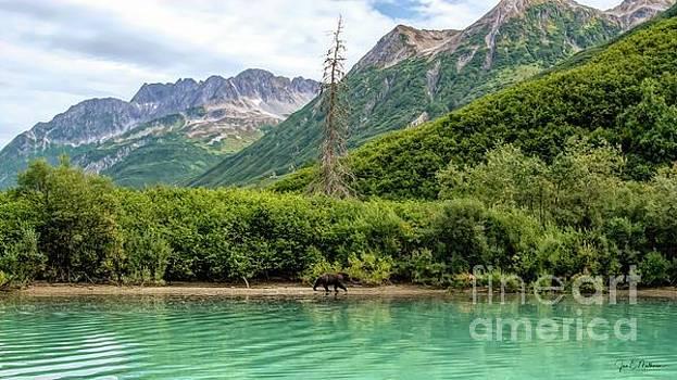 Lake Clark National Park and Preserve - Bear by Jan Mulherin