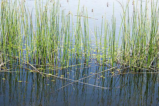 Lake Ilsanjo_533_18 by Tari Kerss