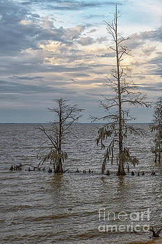 Lake Moultrie in the Winter by Dale Powell