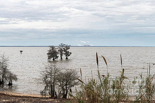 Lake Moultrie Lake Side by Dale Powell