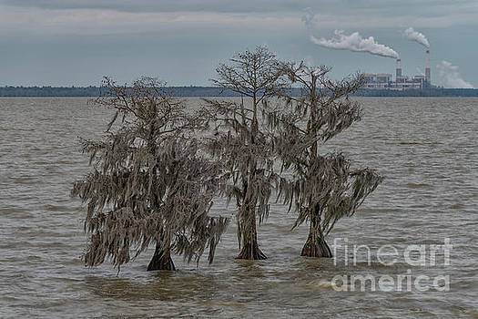 Lake Moultrie - Santee Cooper Cross Generating Station by Dale Powell