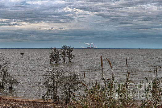 Lake Moultrie - Winter Skies by Dale Powell