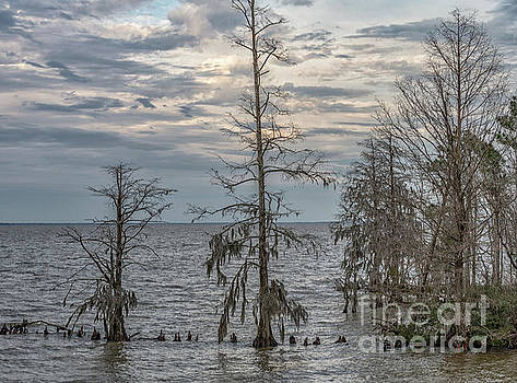 Lake Mountrie - Cypress Tree's Winter Solitude by Dale Powell