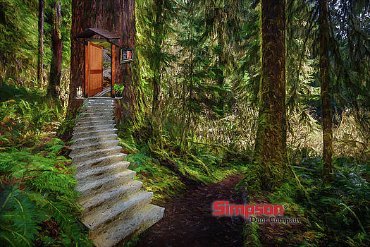 Mike Penney - Lake Quinault Stairs