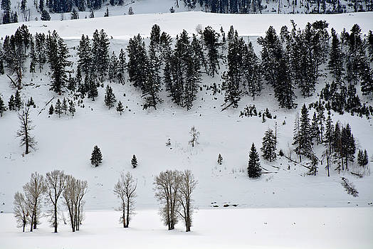 Lamar Valley Winter in Yellowstone by Bruce Gourley