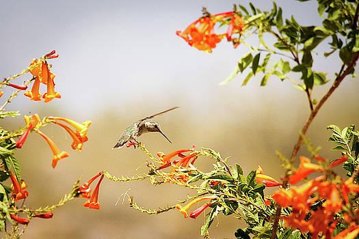 Landing by Cyndi Hardy
