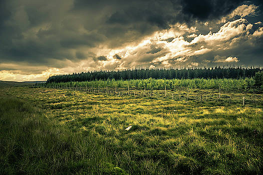 Alister Harper - Landscape View