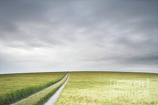 Landscape with barley by Colin Roberts