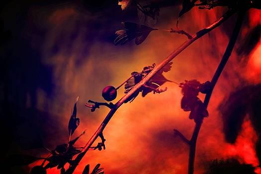 Last berry by Valerie Dauce