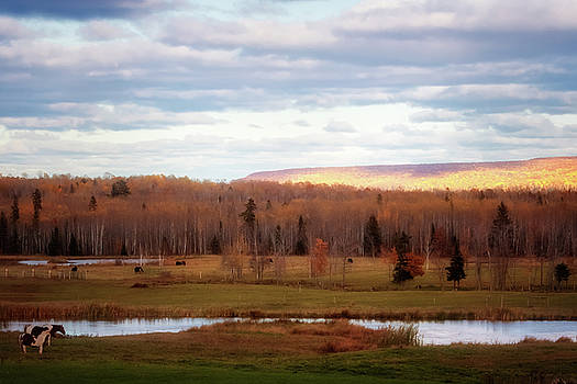 Susan Rissi Tregoning - Last Days of Autumn