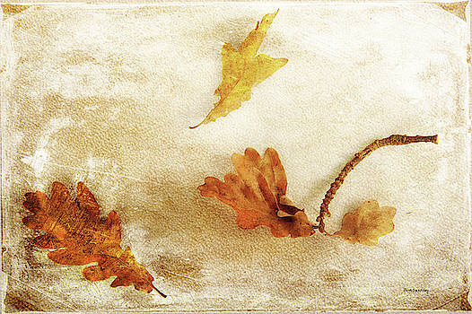 Last Days of Fall by Randi Grace Nilsberg