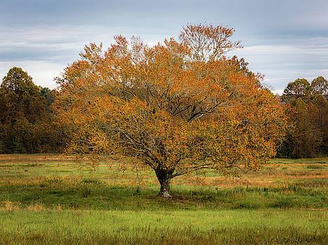 Ecusta Tree by Donnie Whitaker