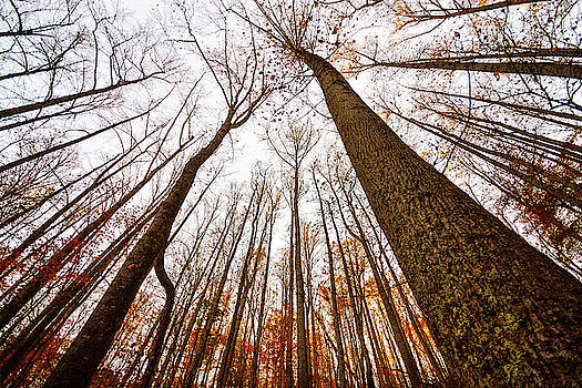 Late Autumn by Greg Booher