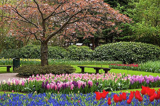 Jenny Rainbow - Late Bloom of Sakura Tree in Keukenhof
