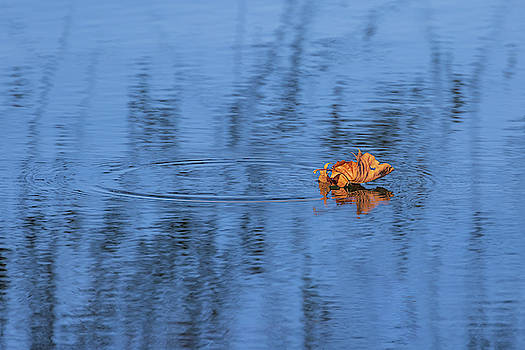 Late Fall Reflections by Allin Sorenson