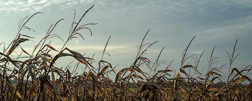 Late Season Corn Stalks Panorama by Steve Gadomski