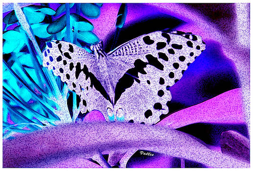 Lavender Butterfly by Vallee Johnson