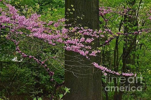 Lavender Pink at Dusk - Central Park New York by Miriam Danar