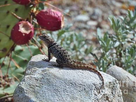 Janet Marie - Lazy Day Lizard