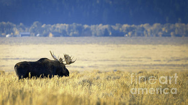 Lazy Morning In Teton National Park by Doug Sturgess