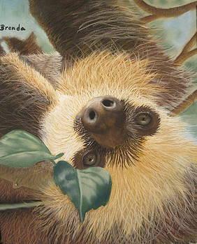 Lazy Sloth by Brenda Maas