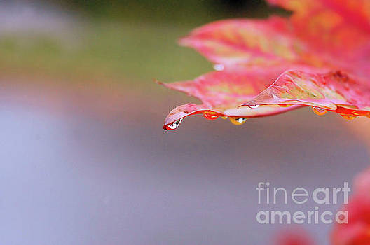 Leaf and Water Drops by Elaine Manley
