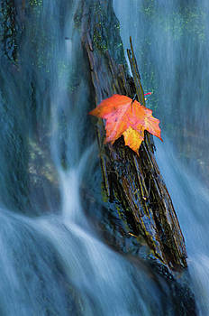 Leaf at Alger Falls by Jeffrey Klug