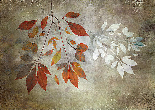 Leaf Fall with White by Glenys Garnett