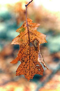 Leaf by Patrick Groleau