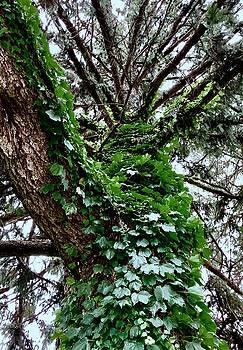 Leafy Tree Trunk by Lukas Miller