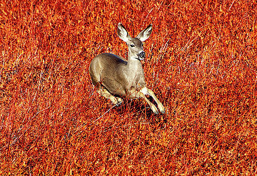 Leaping Deer by Anthony Jones