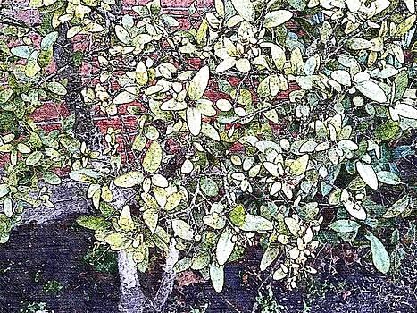 Leaves 444 by Lan Kwon