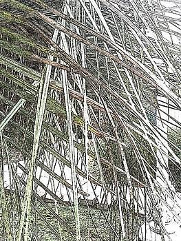 Leaves 548 by Lan Kwon