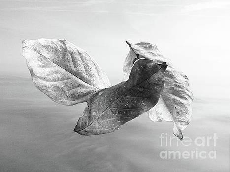 Leaves In The Wind by Ella Kaye Dickey