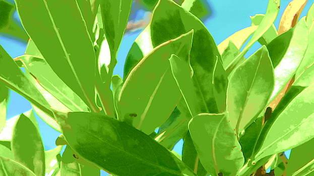 Leaves of the Mangrove by Julie Harrington