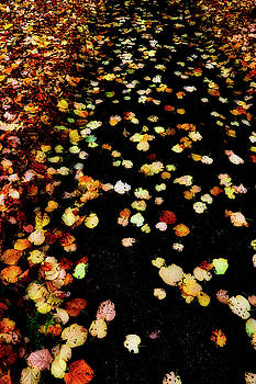 Leaves on Path by Gavin Bates