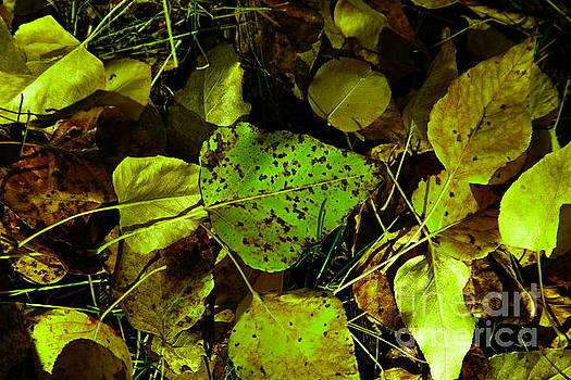 Leaves on the forest floor  by Jeff Swan