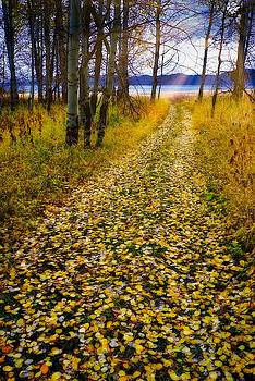 Leaves On Trail by Tom Gresham