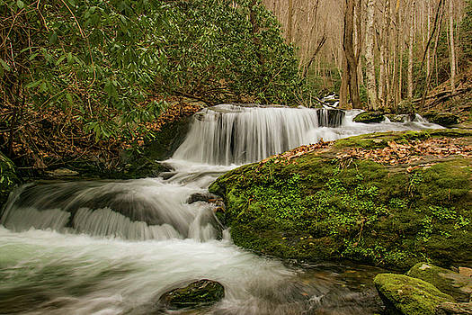Ledbetter Creek 2 by Lisa Bell